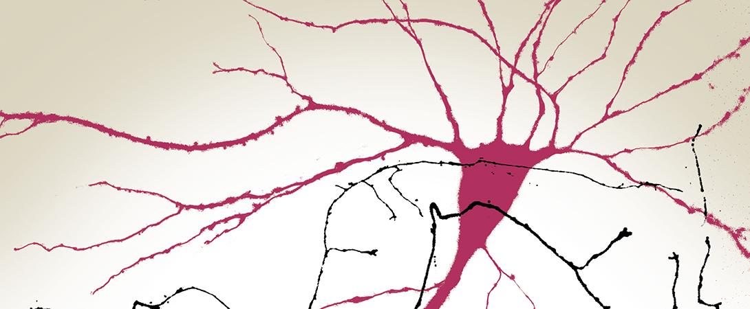 Neurobiology of Disease Workshops