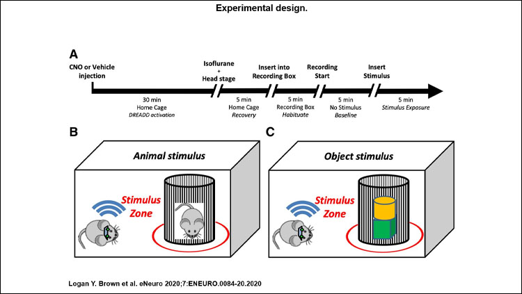 An image displaying the experimental design.
